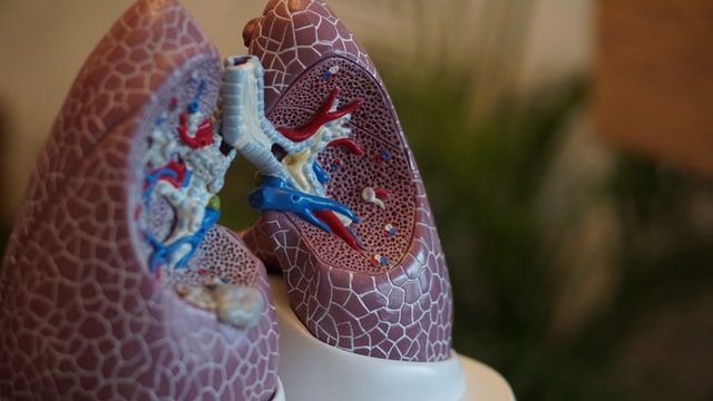 Nac N-Acetylcysteine on the Lungs